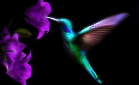 Sen kolibra